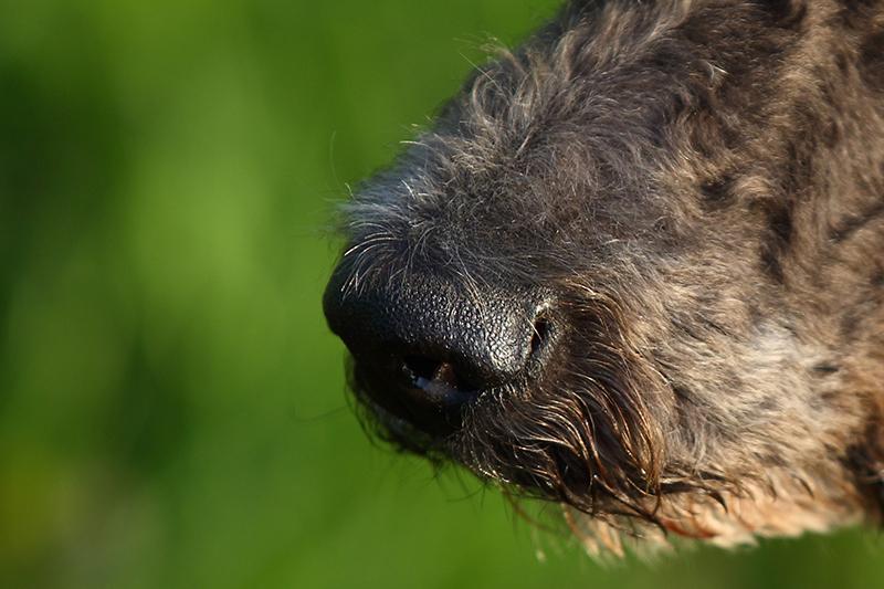 Hundeschnautz